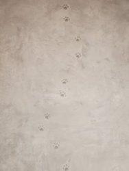 スタジオ猫さん足跡